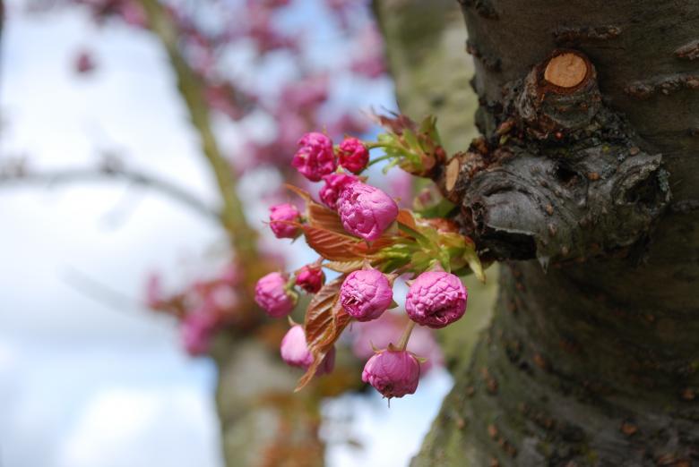 Flower Blossoms - Community